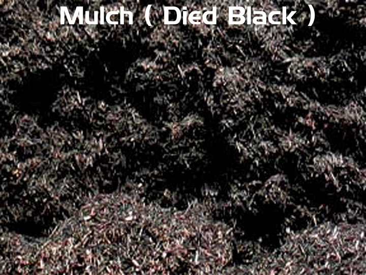 Excellent Black Rubber Mulch Prices 720 x 540 · 450 kB · jpeg